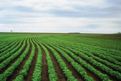 biotecnologia-agricultura-brasileira-biominas